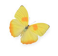 Yellow butterfly isolated on white background Stock Photo