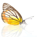 Yellow butterfly on white background Royalty Free Stock Photo