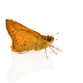 Yellow butterfly on white background Stock Image