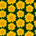 Yellow chamomile pattern Stock Photos