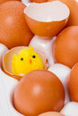 Yellow chicken in eggshell toy and eggs Stock Image