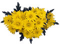 Yellow chrysanthemums over white background Stock Photo