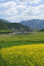 Yellow cole flowers and mountains Royalty Free Stock Photos