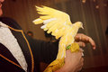 Yellow colored dove magic tricks with Stock Image