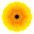Yellow concentric gerbera flower isolated on white mandala design background kaleidoscopic Stock Photography