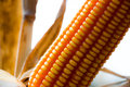 Yellow corn background Royalty Free Stock Photo