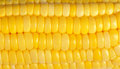 Yellow corn background macro closeup Stock Photo