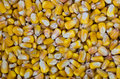 Yellow corn or maize kernels Royalty Free Stock Photo