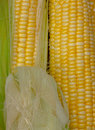 Yellow corn skin pretty closeup Stock Photo