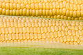 Yellow corns background Stock Photo