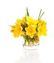 Yellow crocus vernus spring crocus on white background Stock Image
