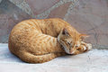 Yellow cute cat sleeping on marble chair Royalty Free Stock Photo
