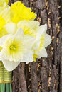 Yellow daffodil bridal bouquet bride s leaning on tree closeup Stock Image