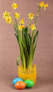 Yellow daffodils Royalty Free Stock Images