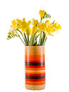Yellow daffodils and freesias flowers in a vivid colored vase, close up, isolated, white background Royalty Free Stock Photo