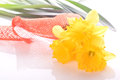Yellow daffodils plant orange silk ribbon Royalty Free Stock Photography