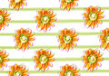 Yellow daisy background Royalty Free Stock Photography