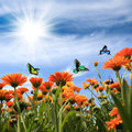 Yellow daisy with butterflies Royalty Free Stock Photo