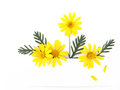 Yellow daisy flower banner Stock Image