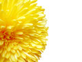 Yellow daisy flower and white background Stock Photo