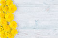Yellow dandelion flowers as decorative border on light blue wooden board. Copy space, top view.