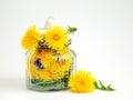 Yellow dandelions, jar Royalty Free Stock Photo