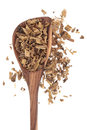 Yellow dock root herb used in herbal medicine in an olive wood spoon over white background rumex crispus Stock Photo