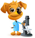 Yellow dog teacher holding microscope. Biology lesson Royalty Free Stock Photo