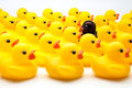 Yellow ducks of gum and one black Royalty Free Stock Photography