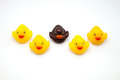 Yellow ducks line of of gum Royalty Free Stock Photography