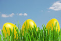Yellow easter eggs in green grass Royalty Free Stock Image