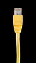 Yellow ethernet cable a against a black background Stock Images