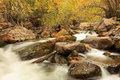 Yellow fall color by a stream in the Utah mountains. Royalty Free Stock Photo