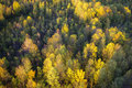 Yellow Fall Trees from Above Royalty Free Stock Photo