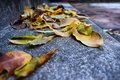 Yellow falling leaves on granite steps on autumn time Royalty Free Stock Photo