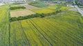 Yellow Farming Fields Royalty Free Stock Photo