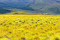 Yellow field against blue mountain Royalty Free Stock Photography
