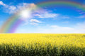 Yellow Field Against Rainbow Sky And Sun Burst Royalty Free Stock Photo