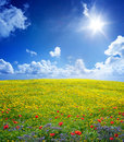 Yellow field in serene scene meadow with flowers and blue sky Stock Image