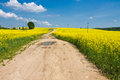 Yellow fields Royalty Free Stock Photo
