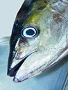 stock image of  Yellow fin tuna fish head on a silver tray