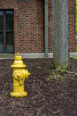 Yellow fire hydrant and tree safty near a building Royalty Free Stock Photography