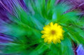 Yellow flower abstraction Stock Photos