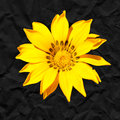 Yellow flower against a black background closeup of paper Stock Photo