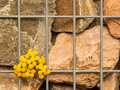 Yellow flower on bars in front of rock wall solitary a bar a red Stock Images