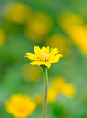 Yellow flower and blur background Royalty Free Stock Photo