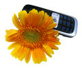 Yellow flower and cell phone (clippining path) Royalty Free Stock Photo