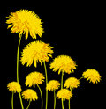 Yellow flower,chrysanthemum Stock Images