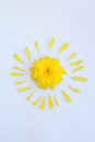Yellow flower of chrysanthemum with petals on a white background Royalty Free Stock Photo