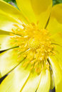 Yellow flower closeup beautiful macro shot Stock Photography